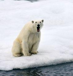 Sooo cute!! Wonderful Wildlife Photography - Cute - Stylist Magazine