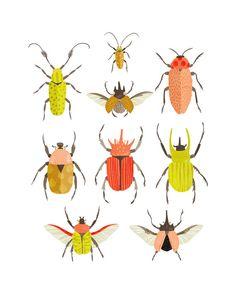 Art Print  Beetle Identification Chart by smalltalkstudio on Etsy, $20.00  for M's side...