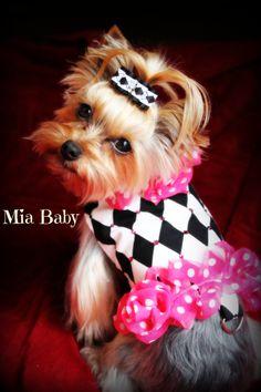 Harlequin, Yorkie, Pink, Dog clothes, Mia Yorkie