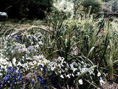 Hortus Urbis Parco Appia Antica