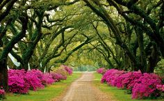 i want a piece of property, strictly so there is enough room to plant a tree lined driveway