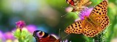 Best Tips for Creating a Butterfly Garden ~ Garden Down South All Plants, Types Of Plants, Free Facebook Cover Photos, Wind Break, Types Of Butterflies, Sand And Water, Passion Flower, Down South, Travel Tours