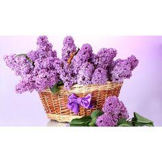 ♡ lilac