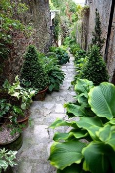 Stairway Path lined with container greenery  including hosta, evergreen trees and other shade plants...
