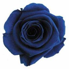 FL0100-59 Standard Rose / Majolica Blue