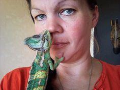 Kameleonttien persoonat – Maanantaikappale Animals, Animales, Animaux, Animal Memes, Animal, Animais, Dieren
