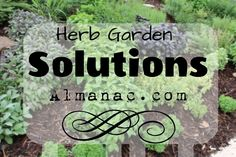 Herb Garden Solutions: Mint is an invasive thug in my garden and everyone else's.  Runners spread rapidly and can choke out perennials and annuals in flower beds. Here are some helpful hints of how to manage your herb garden, and keep it under control!
