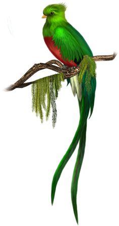 COSAS PARA PhotoScape: IMÁGENES PARA PHOTOSCAPE, PHOTOSHOP Y GIMP DE ANIMALES (AVES) 06