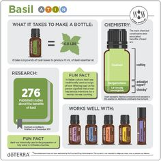 doTERRA Basil Infographic Primary Benefits Helps to keep the skin looking clean, clear, and healthy Wild Orange Essential Oil, Basil Essential Oil, Essential Oils 101, Essential Oil Blends, Doterra Rosemary, Coriander Oil, Basil Oil, Doterra Essential Oils, Herbs