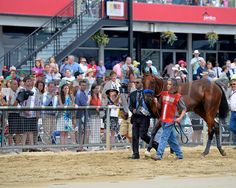 walkover to indoor paddock American Pharoah with Victor Espinoza wins the Preakness Stakes (gr. I) at Pimlico on May 16, 2015. Preakness 1 image 206 Photo by Anne M. Eberhardt