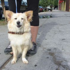 This little girl was found by one of our volunteers wandering around the streets of south Los Angeles.  She only nine months old and loves to play!  When she first came in, this poor little girl was timid, shy and frightened.  She would cower to...