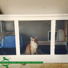 Inspired by Pinterest, a client built an external litter box for their 3 cats. The cats enter through a cat door installed in a linen closet door and then through another cat door into their garage. The hinged lid lifts for easy cleanup. The entire box is screened in for air circulation. The cats love it, the owners are happy, and the mess and smell are gone!  #PresidioWay #catbox #garagecatbox #litterbox #geniusidea #hiddenlitterbox #cleanhouse #veterinarian #cats #kittylove #pets