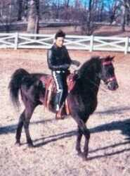 On his Tennessee Walker champion horse