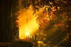 """De brug naar de herfts """"The Bridge to Fall"""" van Lars van de Goor"""