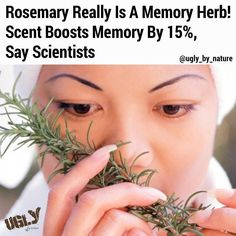 Scientists have shown that the plant really is linked to better memory.  A study of pensioners found that simply being in a room diffused with the smell of rosemary boosted memory test scores by 15 per cent!  Although it might not seem much academics at the University of Northumbria say it could mean the difference between remembering to take medication or not which could prove life-saving.  Dr Mark Moss head of the department of psychology at Northumbria said: I think that received wisdom…