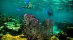 Belize & Tikal Adventure -  15 days, Belize City to Caye Caulker