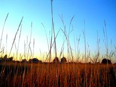 East Hounsfield through the grass by Kathy Mereand, via Flickr