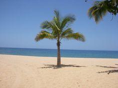 Mini Palm,  Lanai