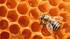 Honey for Growing Long, Natural Hair (Curly Nikki) Long Natural Hair, Natural Hair Styles, Home Remedies, Natural Remedies, Curly Nikki, Curly Girl, Bee Pictures, Genetically Modified Food, Raw Honey