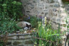 Petite sieste au jardin (c) Denis Pépin, lauréat du concours Jardiner Autrement 2012