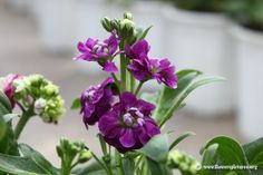 Types of Purple Flowers | Purple stock flower picture (40)