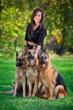 """German Sheperd Dogs never get tired of looking at these dogs especially when their is more one"