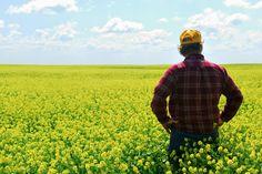 The Farm Credit System: American AgCredit