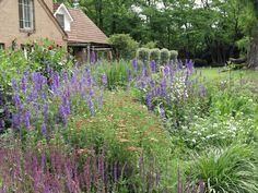 En el jardin: el cantero con sus flores a pleno: salvias, achilleas, verbenas, espuelas y dalias, un festival de color.