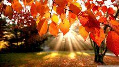 frunze de toamna imagini - Căutare Google