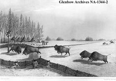 """Cree buffalo pound near Fort Carlton, Saskatchewan. 1820    Illustrator: Back, George  The original artwork, by Lieutenant George Back.  Published in Franklin's """"Narrative"""", 1823, page 112, with the title """"A Buffalo Pound""""."""
