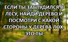 13567496_851943814912245_6978833541320445945_n.jpg (500×312)