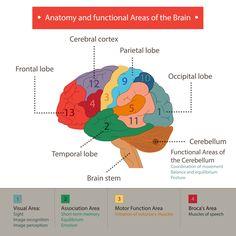 ¿Cuáles son las funciones cognitivas?