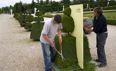 Interesting! So that's how they do it. Versailles orangerie: using templates to trim the topiary