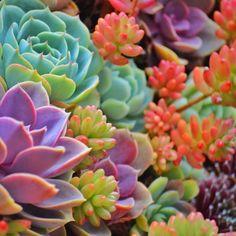 osita-mimi:   Succulents colores neón - team jiggly