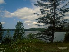 Picturesque scenery on Duck Lake as seen from Duck Lake Road in Orrville Ontario. August 2019