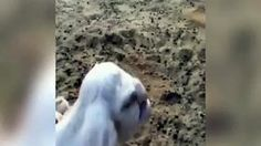 Lamb with human-like features is born on a farm in Russia