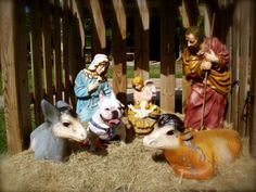 There WAS a frenchie here....;) French Bulldog in the Nativity at Christmas