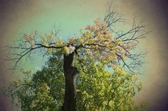 Green Tree of Mysticism 5x7 Photography Print $15