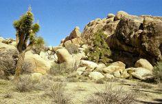 Joshua Tree National Park - California - 35mm Film