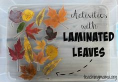 with Laminated Leaves Keep toddlers and preschoolers busy with these activities with laminated leaves.Keep toddlers and preschoolers busy with these activities with laminated leaves. Preschool Science, Preschool Lessons, Toddler Preschool, Preschool Crafts, Toddler Activities, Preschool Fall Theme, Preschool Playground, Teach Preschool, Preschool Ideas