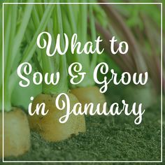 Although the temperature is a lot cooler and light levels are low, there is still plenty you can grow undercover, check out our guide on what to sow & grow in January.  Check out our blog for more info