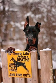 Is there life after death? Jump this fence and find out!
