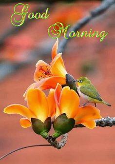 472 best Good Morning Gif photos by sonusunariya Good Morning Wishes Gif, Cute Good Morning Quotes, Morning Qoutes, Morning Morning, Morning Greetings Quotes, Happy Morning, Good Morning World, Good Morning Picture, Good Morning Flowers
