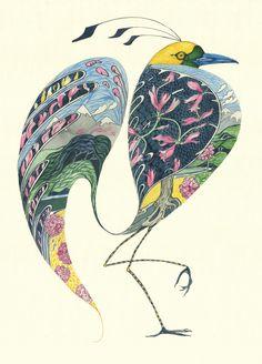 bird of paradise   daniel mackie