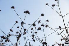Prairie rooftop garden — Bart & Pieter #bartandpieter