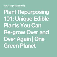 Plant Repurposing 101: Unique Edible Plants You Can Re-grow Over and Over Again | One Green Planet