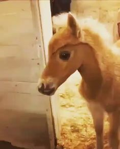😍😍 What big beautiful eyes you have? 😄 - Art Of Equitation Cute Funny Animals, Cute Baby Animals, Farm Animals, Animals And Pets, All The Pretty Horses, Beautiful Horses, Animals Beautiful, Beautiful Eyes, Cute Baby Horses