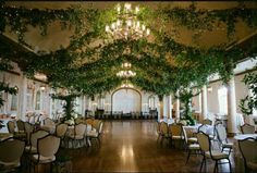Evergreen ceiling drapes