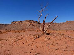 Wadi Hamra (con una acacia tortilis)