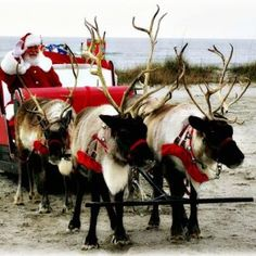 Santa and reindeer at beach